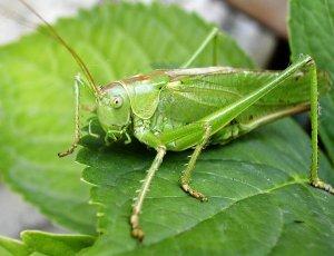 0000 crickets